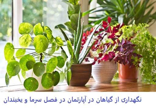نگهداری گیاهان در زمستان