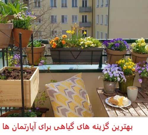 بهترین گیاهان برای رشد در آپارتمان